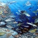 Haie der Welt-Panorama • Druck auf Leinwand