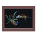 Kunstdruck auf Papier: Kalmare