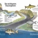 Heimische Flussregionen Wissenstafel • Druck auf Leinwand