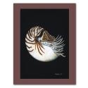 Kunstdruck auf Papier: Nautilus
