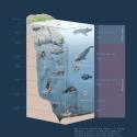 Tiefsee Meereszonen • Wissenstafel • Grafic Learning