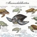 Meeresschildkröten • Wissenstafel • Grafic Learning