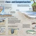 Fluss-Gumpentauchen • Wissenstafel • Grafic Learning
