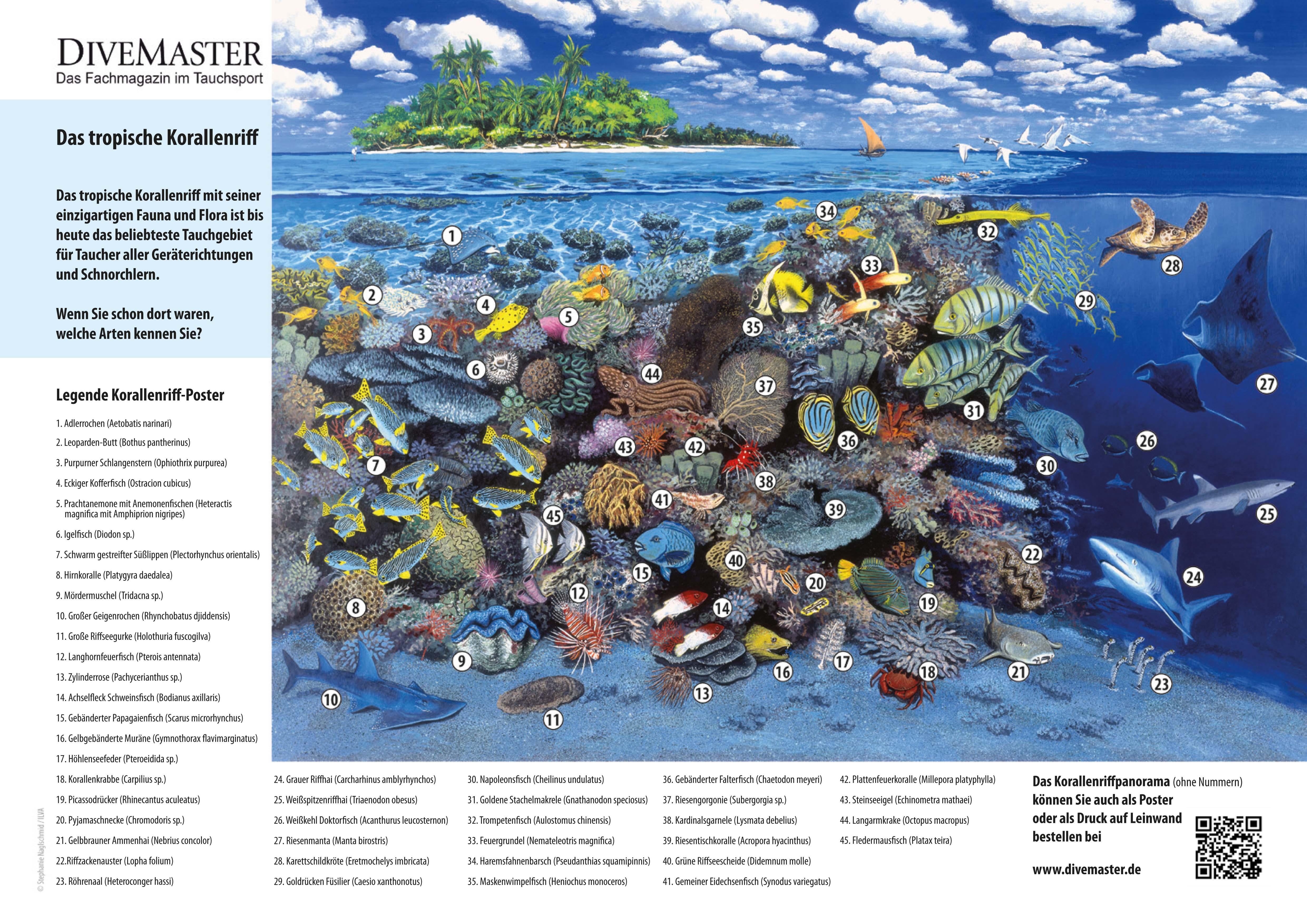 Klappseite-DM82-Korallenriffposter-96dpi