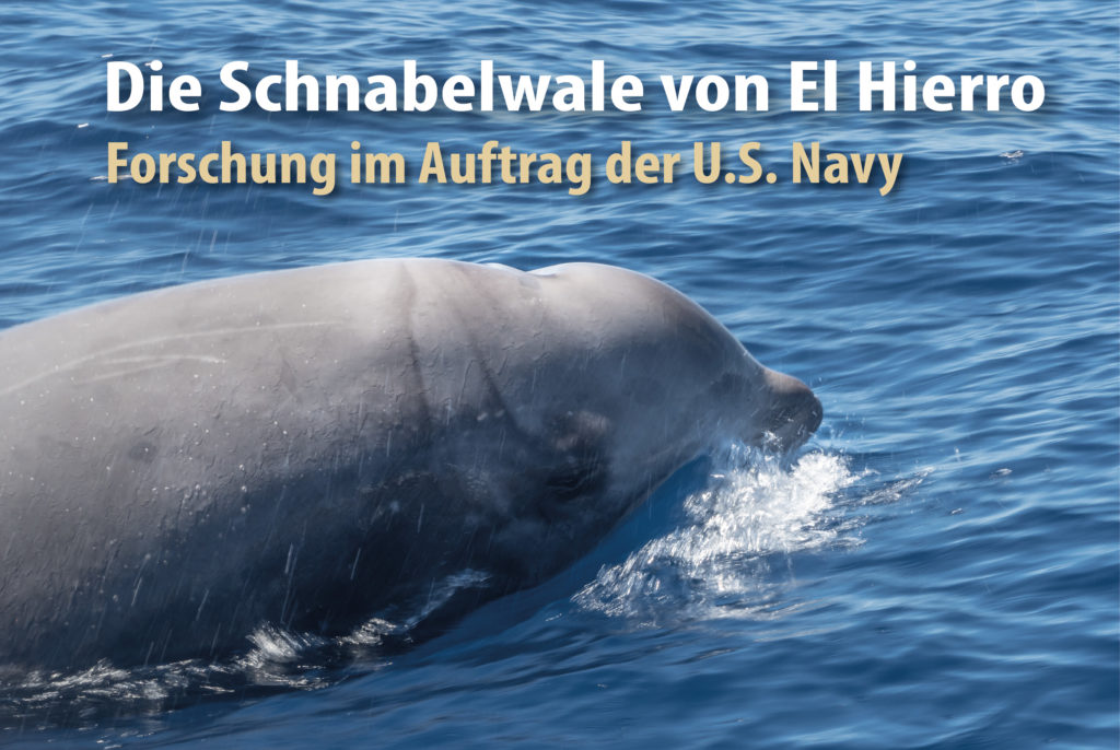 Die Schnabelwale von El Hierro