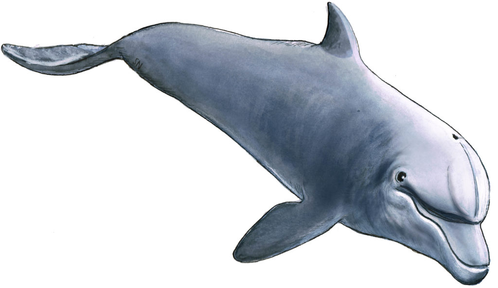 Delfinschutz - Neue Regelungen in Ägypten