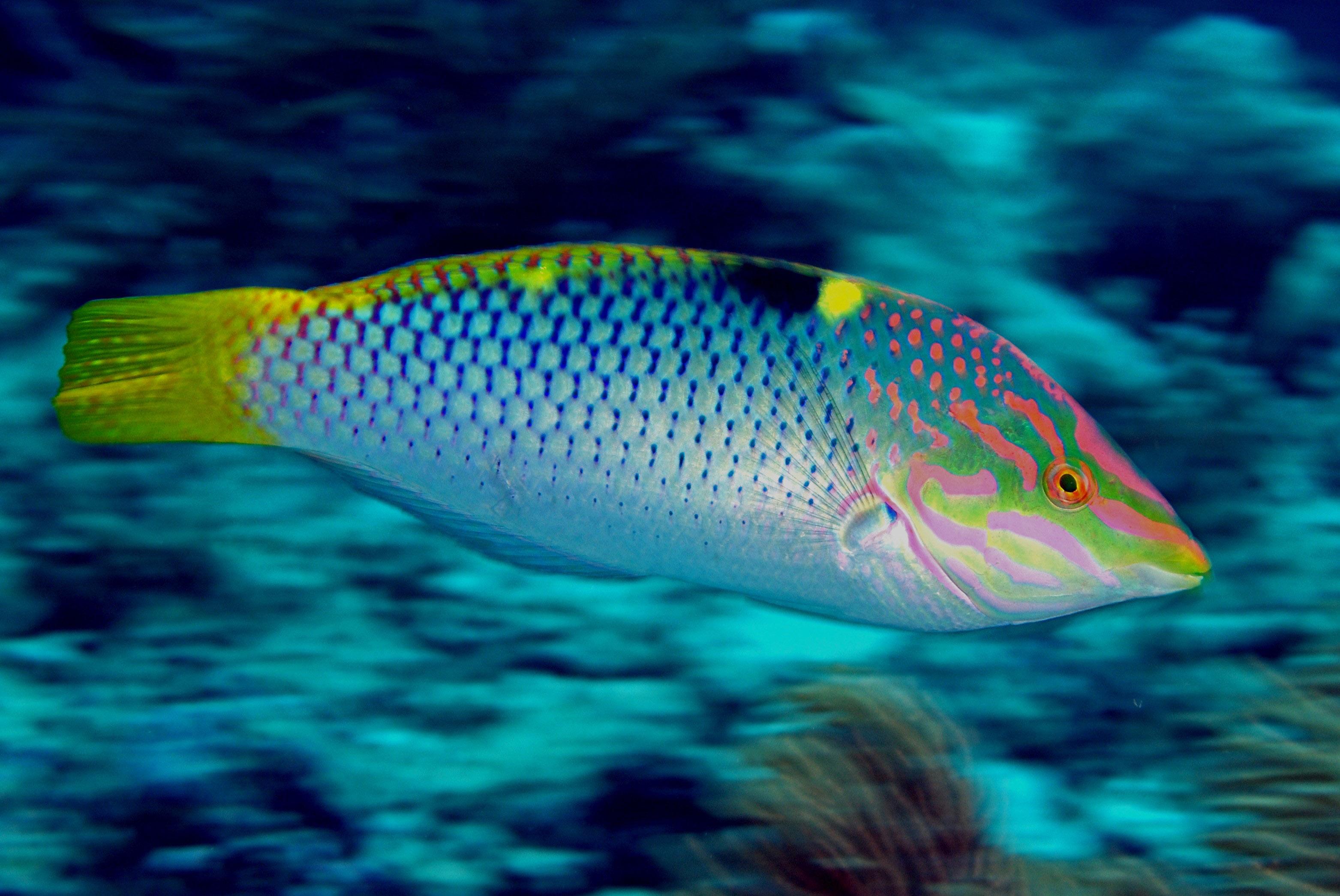 Die Auslöseverzögerung: 1..2..3... der Fisch ist vorbei
