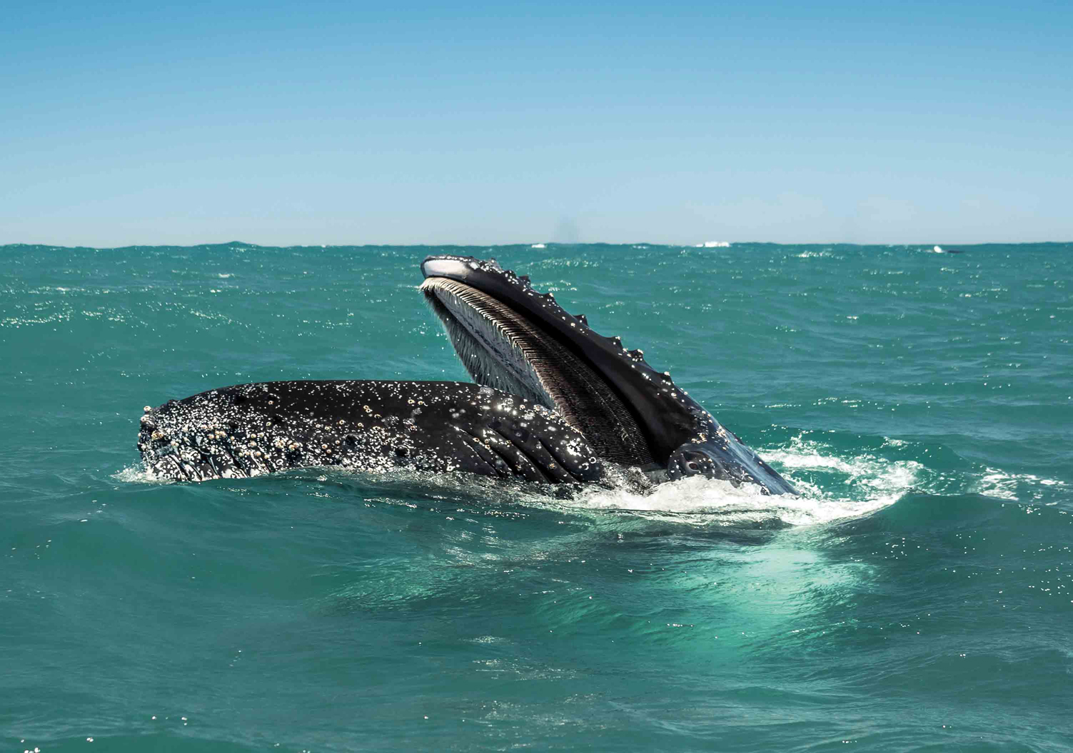 Whale Trek - Südafrika