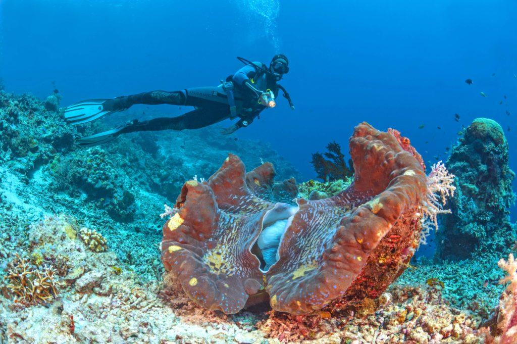 Meeresschutz in Selayar - Indonesien