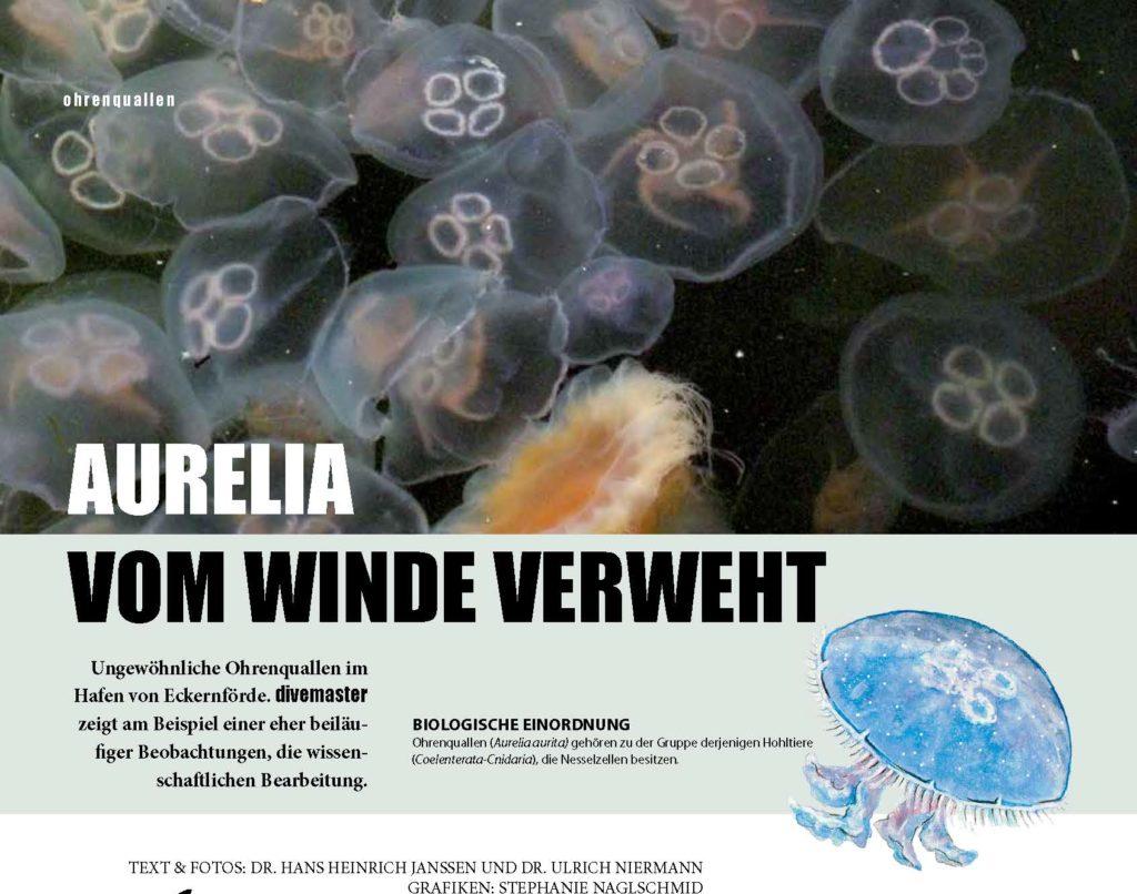 Aurelia - Ohrenqualle