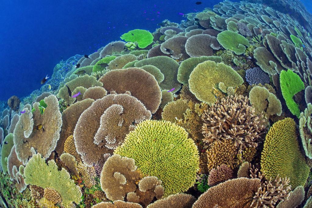 PNG • Papua Neu Guinea