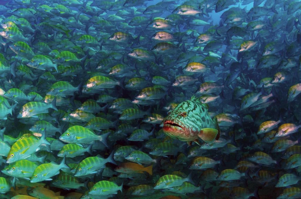 Meeresreservate - so geht's