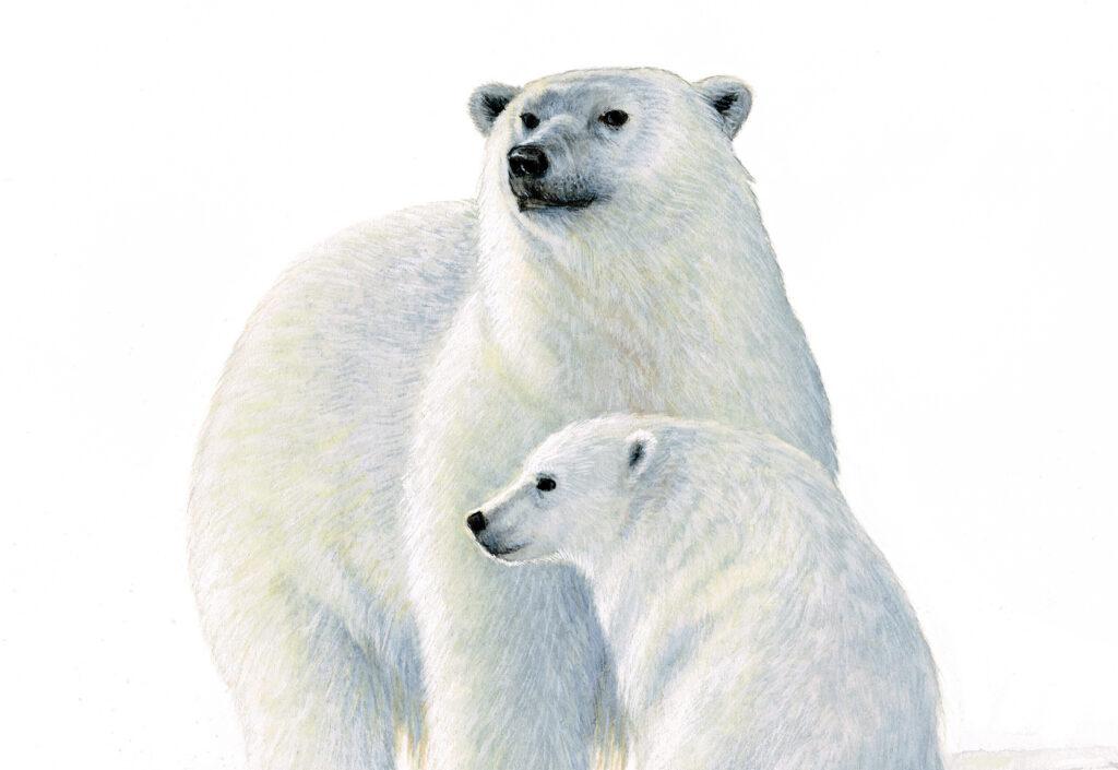 Eisbären Wissen