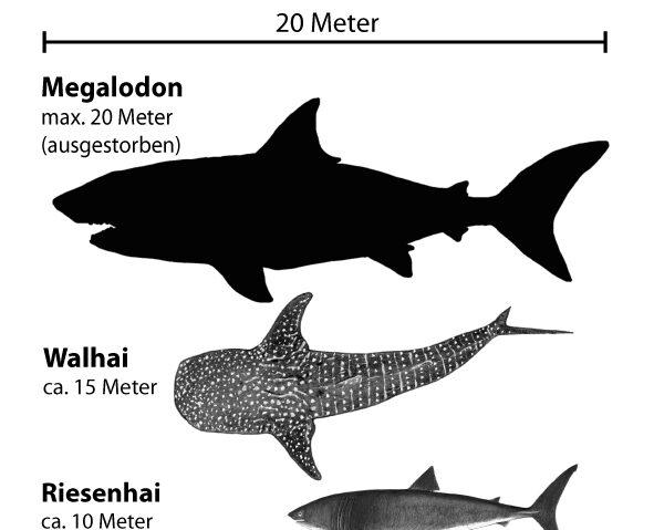 Giganten der Meere