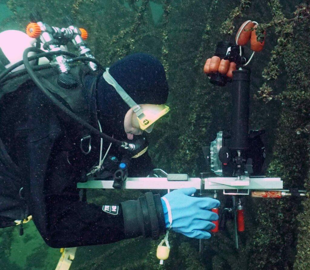 Fischreiser im Bodensee