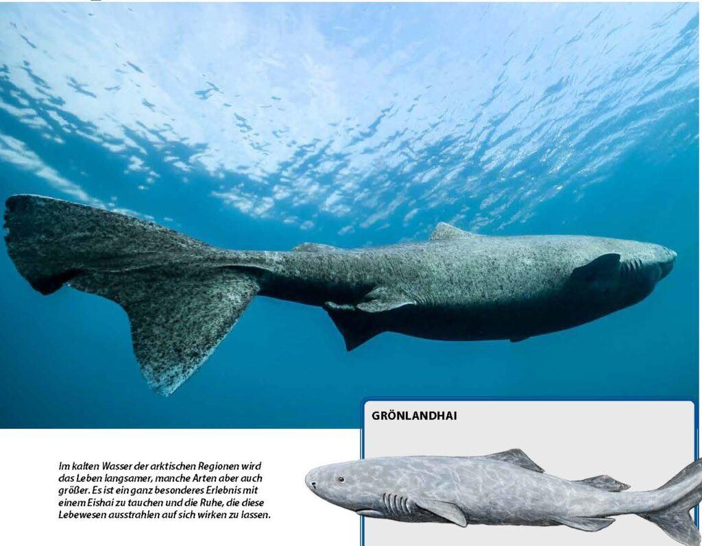 Eishaie